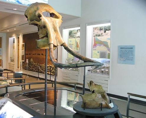 マンモスの化石