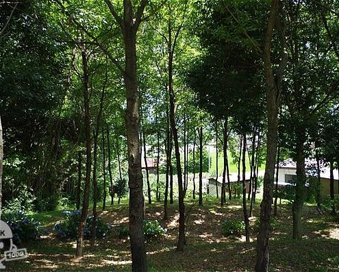 公園北側にある森