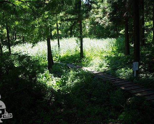 湿性花園と木道