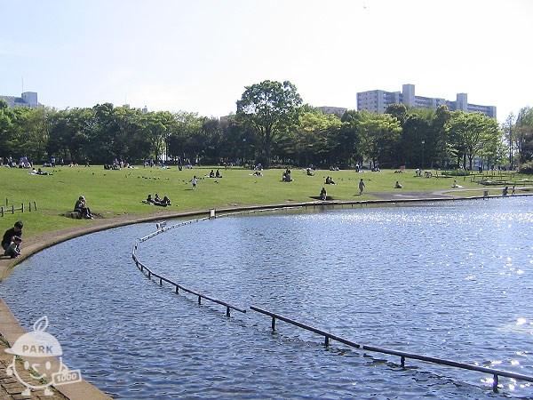 大芝生広場と大池
