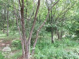 わんぱくの森