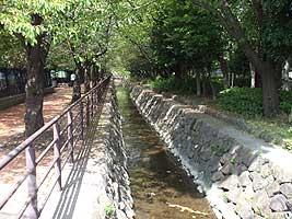 小川の両端には桜の木!