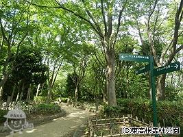 古代植物園