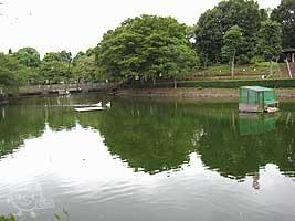 白鳥のいる池