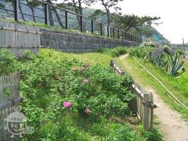 ハマナス花園