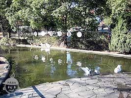 水鳥コーナー