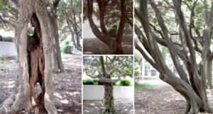 不思議な形をした木