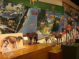馬の博物館・常設展示