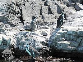 日本最大のペンギンの展示施設