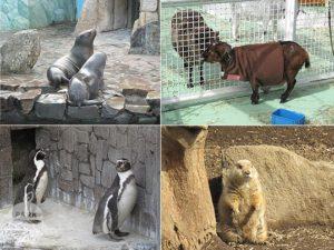 行船公園・自然動物園