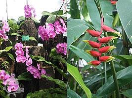 色鮮やかな植物