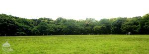 広~い芝生