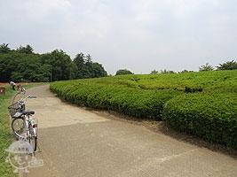 つじ山広場