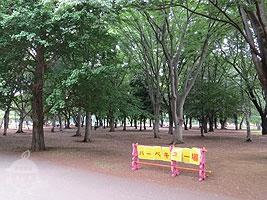 バーベキュー広場 (ユーカリ広場)