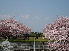 奈良原公園