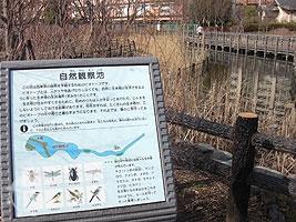 自然観察池