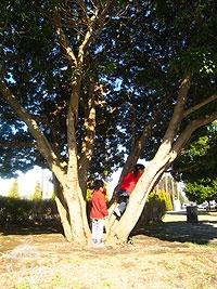 おもしろい木