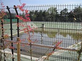 さえずり池