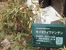 植物の名札