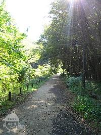 観察ゾーンの道