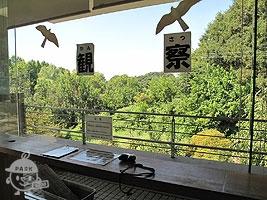 野鳥観察コーナー