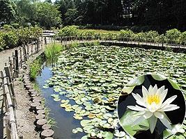 水生植物池