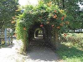 草花のトンネル