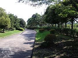 多目的運動広場脇の道