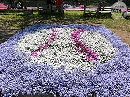 芝桜市民ガーデン