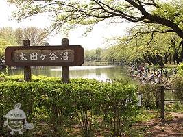 太田ヶ谷沼