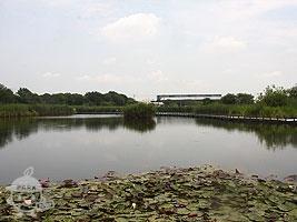 水鳥の池・宝蔵寺沼