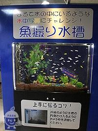 魚撮り水槽