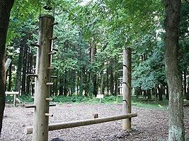 木登り競争