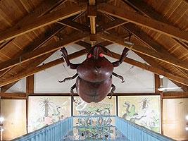 大きなカブトムシ