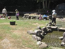 芝生広場内の池