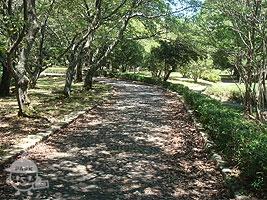 園内の散歩道