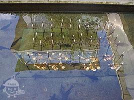 カキ養殖の模型