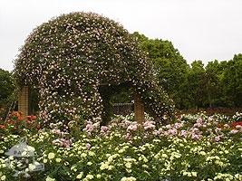 西洋庭園・バラ園