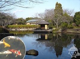 日本庭園内の様子