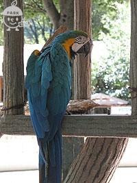 カラフルな鳥さん