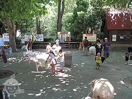 ヤギとヒツジの広場