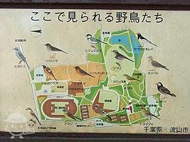公園案内図&野鳥の地図