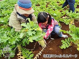 農業見本園