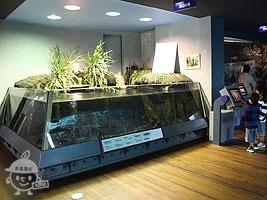 岸辺の魚水槽