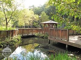 観察池と中ノ島(ビオトープスタイルの池)