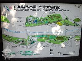 金川の森案内図