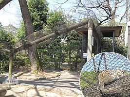 リスの小屋