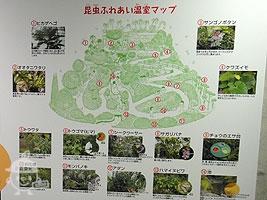 昆虫ふれあい温室(2F-1F)
