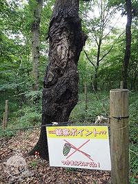 雑木林ゾーン