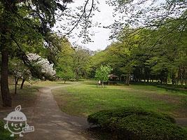 森の中の芝生広場